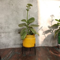 Glass planter with stand - Big